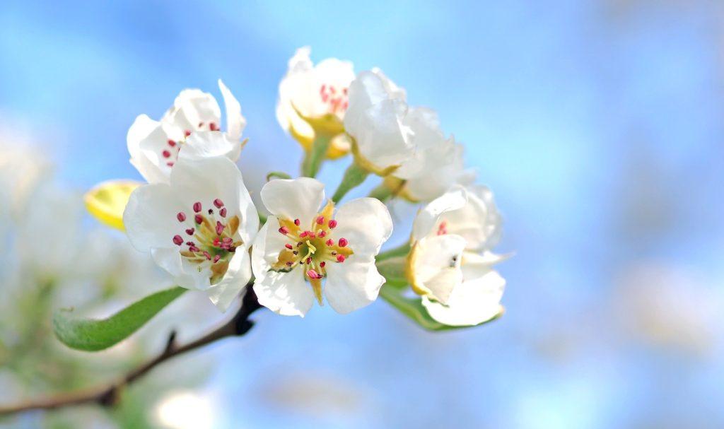 Frühlingshaftes Bild einer Blüte